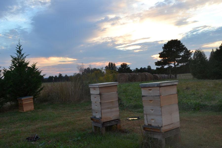 How I Became A Beekeeper