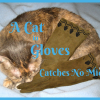 A cat in gloves catches no mice. Benjamin Franklin. Image Copyright 2013 Sheree Martin
