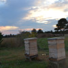 Beehives at sunset Copyright 2013 Sheree Martin