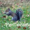 Alert Squirrel Judging vs Perceiving
